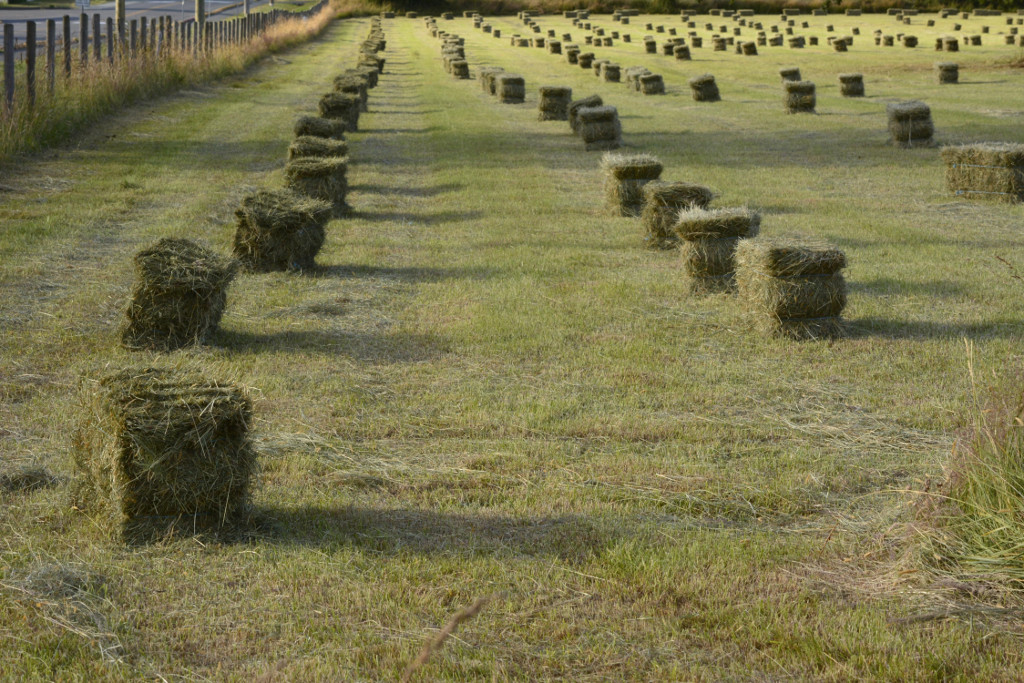 hay-silage